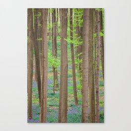 Hallerbos 2 Canvas Print