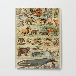 Adolphe Millot- Vintage Animal Print Metal Print
