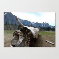 woody Canvas Prints featuring Woody by Dee Reimer