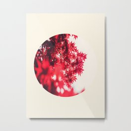 Transparent Red Japanese Maple Round Photo Metal Print