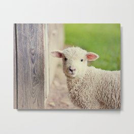 Little Lamb I Metal Print
