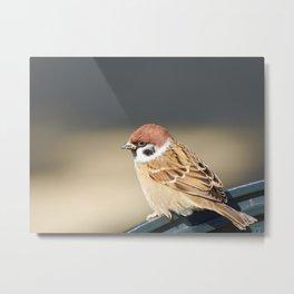 Eurasian Sparrow Photography Metal Print