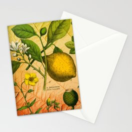 Fruit Branches Stationery Cards