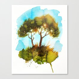 Pines in the Evening Sun Canvas Print