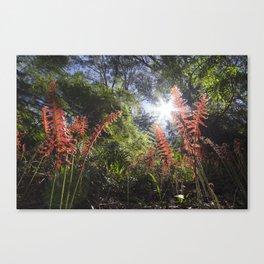Ferns in Bunyip State Forest, Victoria - Australia Canvas Print