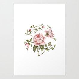 Pink Roses – Original Watercolor Art Print