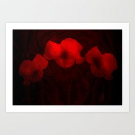 Poppies aglow Art Print