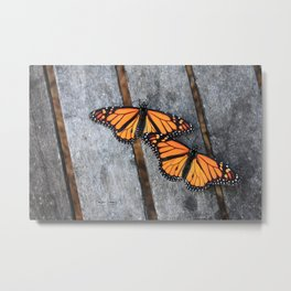 Monarchs two Metal Print
