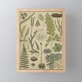 Ferns And Mosses Framed Mini Art Print