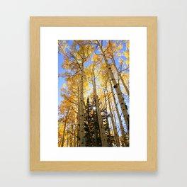 Autumn Aspen Framed Art Print