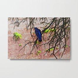 Blue Pigeon Pink Wall Bare Tree Metal Print