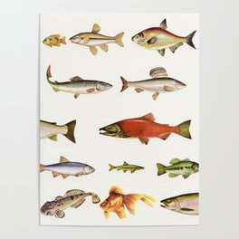 Fishing Line Poster