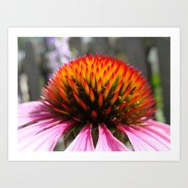 Lavender Echinacea/Coneflower Art Print