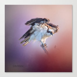 Osprey Raptor Hunter Canvas Print