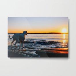 Dog Watching the Sunrise Metal Print