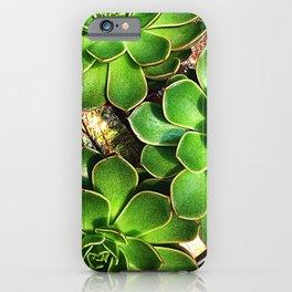 3 Succulents iPhone Case