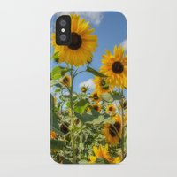 sunflowers iPhone & iPod Cases featuring Sunflowers by David Tinsley