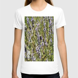 The Buzz in the Lavender Field T-shirt