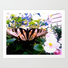 Summer;flies Art Print