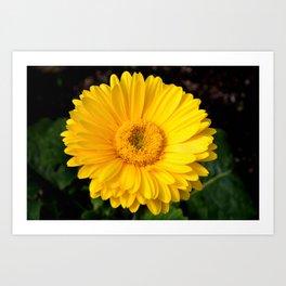 Yellow Calendula Flower Art Print