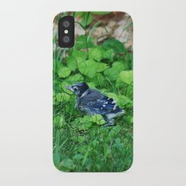 Baby Bluejay Bird Color Photo iPhone Case