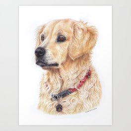 Golden retriever colored pencil drawing Art Print