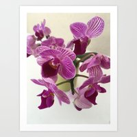 Pink and Sweet Petite Orchids Art Print