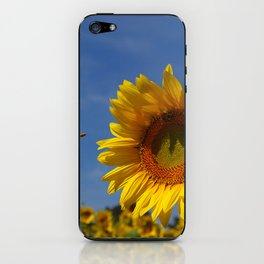 Summer Sunflower Soloist with backup chorus iPhone Skin