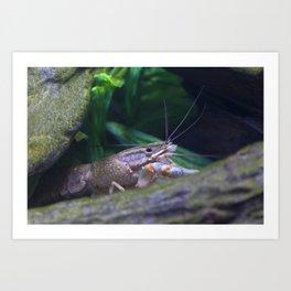 The crayfish Art Print
