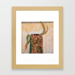 Green & Orange Ivy - Trastevere, Italy Framed Art Print