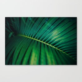 Green Leaf Palm Frond Photo Canvas Print