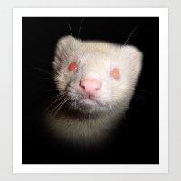 Albino Ferret black background Art Print