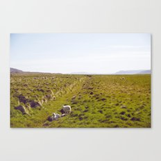 Sheeps in Iceland Canvas Print