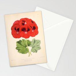 Pelargonium Edward Perkins Vintage Floral Scientific Illustration Stationery Cards