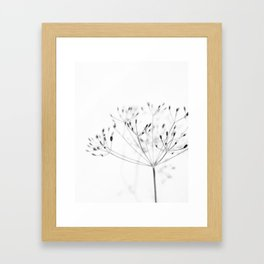 Dill Sprouts / Nature Photography Framed Art Print