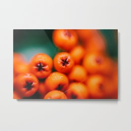 Winter Berries (Macro) in London by Diana Eastman Metal Print