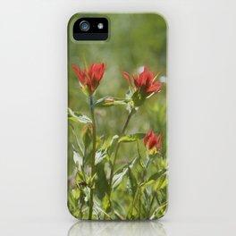 Indian Paintbrush Painterly iPhone Case