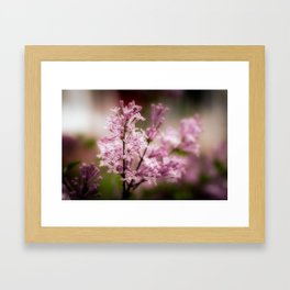 Lilacs - Orton-ized Framed Art Print