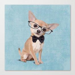 Mr. Chihuahua Canvas Print