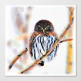 Winter Owl Watercolor Canvas Print