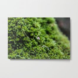 moss mushroom Metal Print