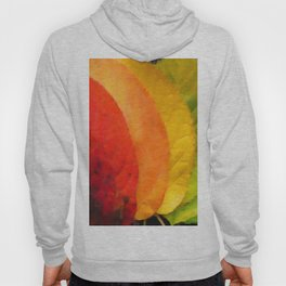 Collection beautiful colorful autumn leaves Hoody