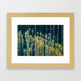 Golden Rod Framed Art Print