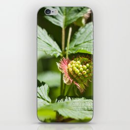 Young Salmonberry Photography Print iPhone Skin