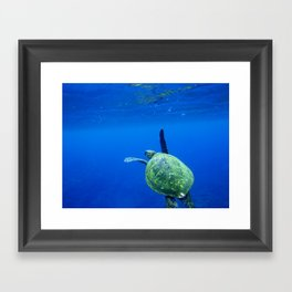 Turtle of the Sea Framed Art Print