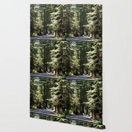 Humboldt State Park Road Wallpaper
