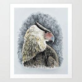 Caracara Art Print