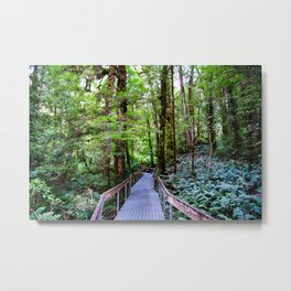 Rainforest Gallery, Warburton, Victoria Metal Print