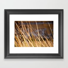 Into the dunes Framed Art Print