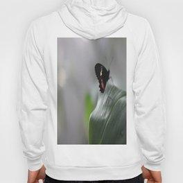Butterfly Bokeh  Hoody